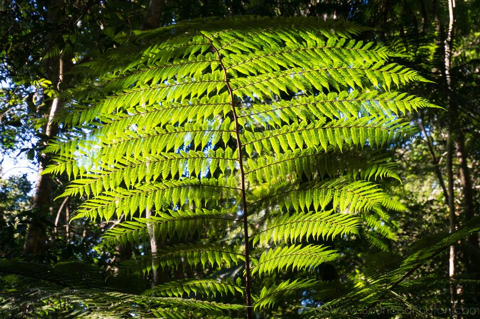 A fern displays its green feathers against the sun on Rosewood Creek walk