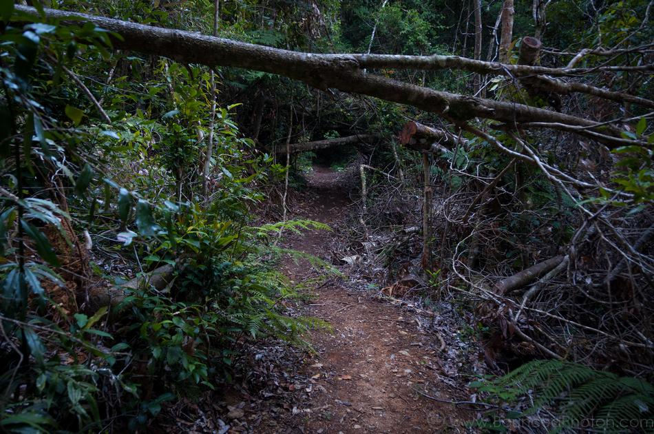 Hobbit trail through the rainforest