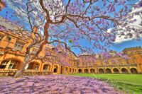 Jacaranda Tree at the University of Sydney, Australia