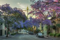 Jacarandas in Bloom on Cathedral Street, Woolloomooloo, Sydney, Australia