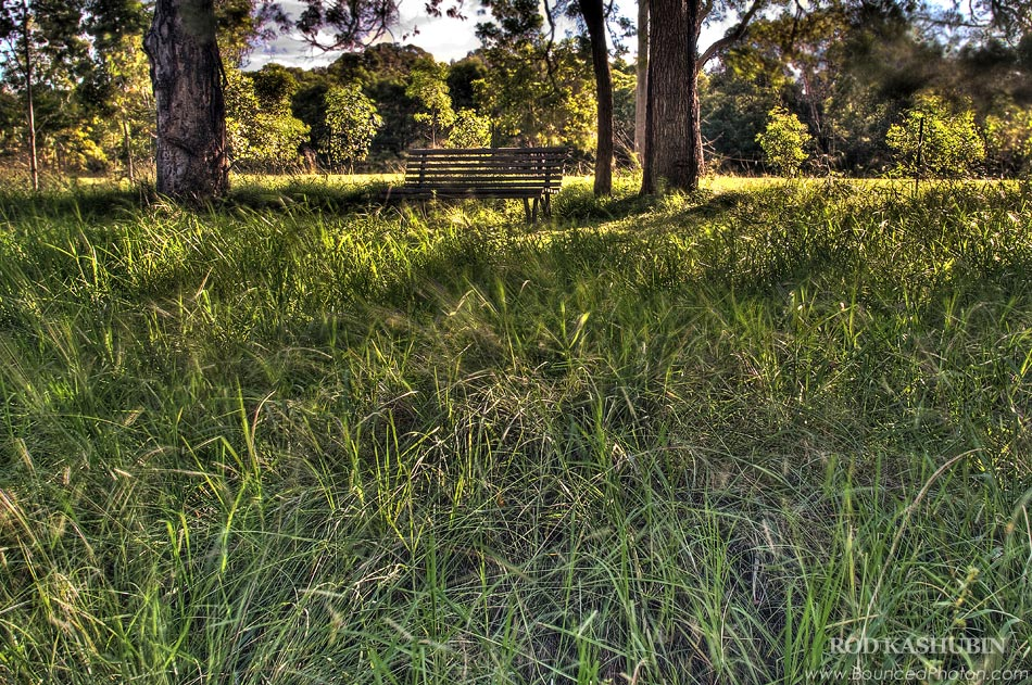 Sunny And Grassy In Parramatta Park