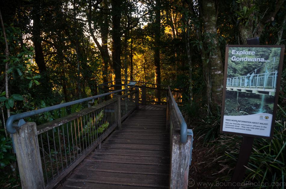 The Lyrebird track