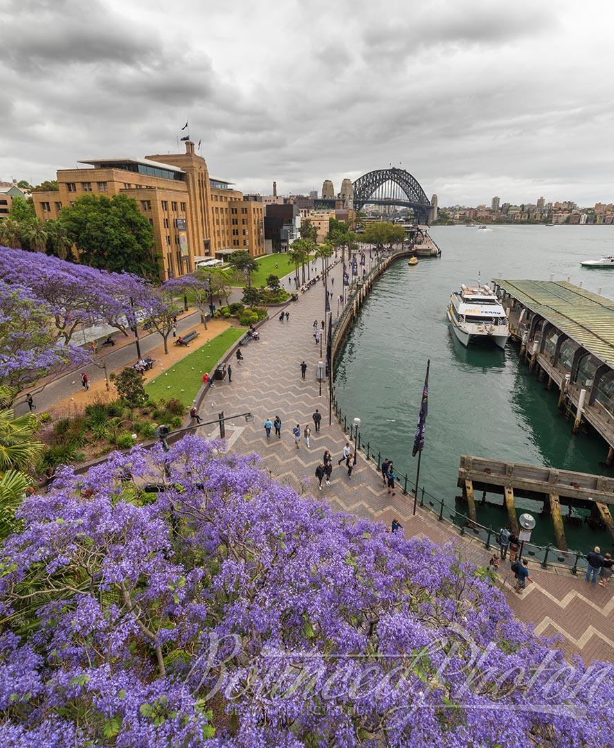 Top 5 Sydney Jacaranda Photospots - Circular Quay