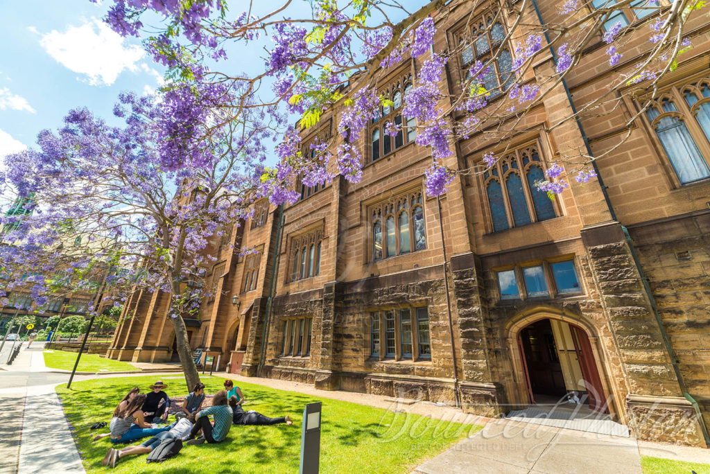 Top 5 Sydney Jacaranda Photospots - University Of Sydney Picnic